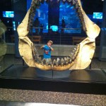 Jackson through the shark jaws