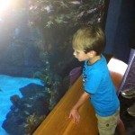 Jackson Loking at Exhibits